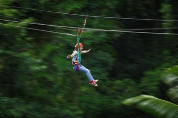 Excursión de un día en tirolina por la selva tropical de Daintree y...