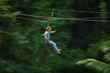 Excursion en tyrolienne dans la forêt tropicale de Daintree et visite...