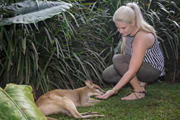 Kuranda in Skyrail e Scenic Railway con Rainforestation, Koala