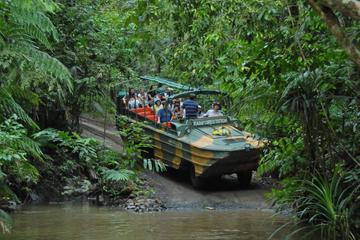 visite-du-par-national-de-rainforestation-de-kuranda
