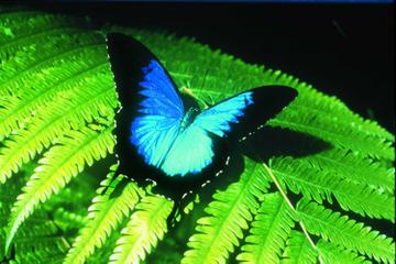 Le sanctuaire des papillons australien
