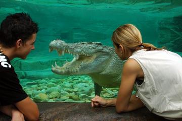 ZOOm em Cairns e Wildlife Dome