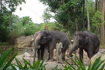 マイバスで行く!シンガポール動物園