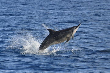 Dolphins encounter and BBQ on Benitiers Island
