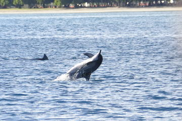 Dolphins encounter and whale watching...