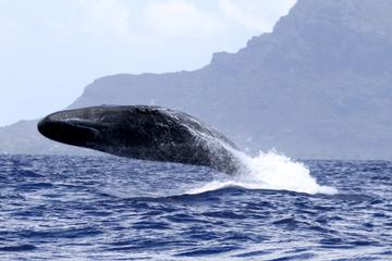 Whale watching - Exclusivity