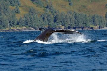 Excursão ao litoral de Juneau: Aventura de observação de baleias