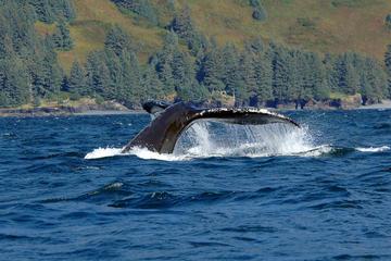 Excursión por la costa de Juneau: Aventura de avistamiento de ballenas