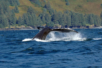 Juneau Shore Excursion: Whale-Watching Adventure