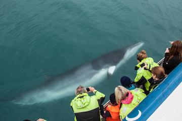 Excursión por la costa de Reykjavik: Crucero de avistamiento de...
