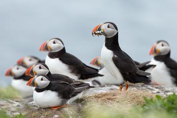 Kustexcursie vanuit Reykjavik: boottocht naar de papegaaiduikers