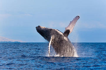 Kustexcursie vanuit Reykjavik: walvissen spotten
