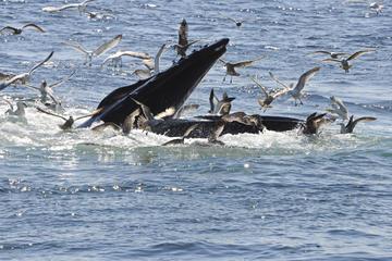 divertissement-avec-baleines-reykjavik