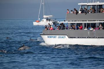 Bootsfahrt mit Walbeobachtung ab Newport Beach