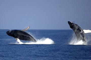 Cruzeiro de observação de baleias saindo de Newport Beach