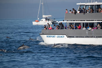 Book Whale-Watching Cruise from Newport Beach on Viator