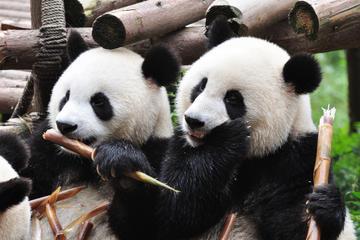 Excursão privada: Passeio Turístico em Chengdu com Visita ao Centro...
