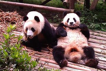 Private Tour: Chengdu Panda Base and Leshan Grand Buddha
