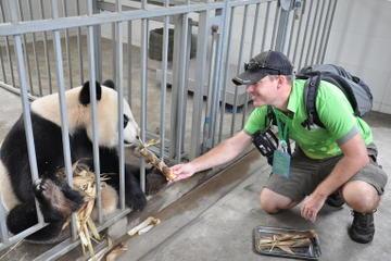 Voluntário no Centro de resgate de Panda por um dia