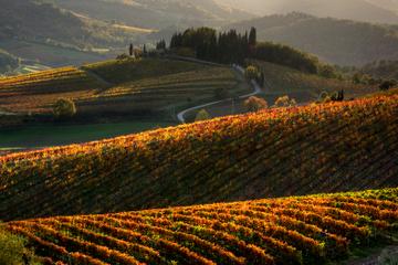 Escursione in Toscana da Siena con