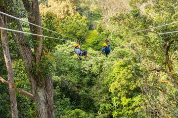 Full Day Small Group Adventure-Kohala Zip and Dip Tour