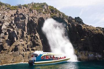 Excursion d'une journée entière sur l'île Bruny au départ de Hobart