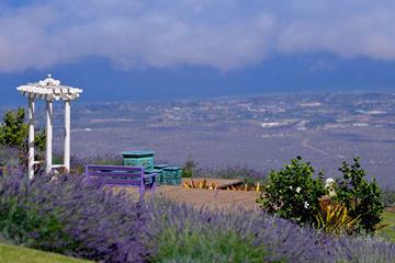 小グループ マウイ ツアー : ハレアカラ国立公園、ラベンダー農園とワインの…