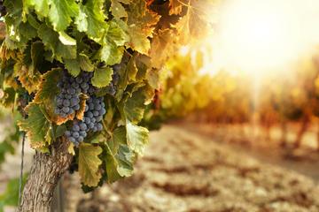 Excursão com degustação de vinhos em Alentejo saindo de Lisboa...