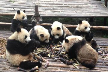 Private 2-Day Chengdu: Giant Pandas and Xi'an Terracotta Warriors