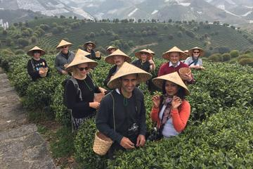 Yangshuo Private day tour to Seven Fairies Peak tea plantation and Xianggong hill