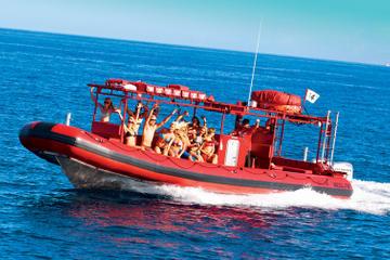 Excursão para Observação de Baleias...