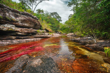 3-Day Tour to Caño Cristales from Bogotá