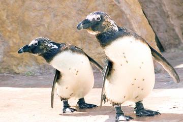Biglietto d'ingresso allo Zoo di Lisbona che include il tour Hop-On