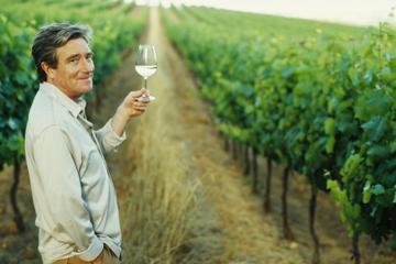 Excursão pelo Vale do Douro para degustação de vinhos do Porto...