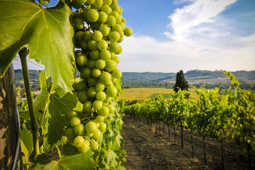 Vinho Verde Day Trip from Porto with Wine Tasting and Lunch