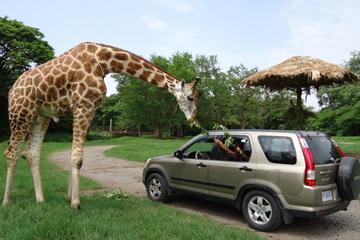 Excursión de 2 días: Auto Safari Chapín Zoo y Monterrico playa de...