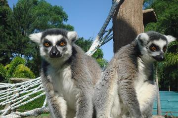La Aurora Zoo Admission Ticket near...