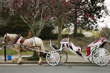 Parcours en voiture à cheval dans...