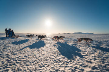 1-Hour Small-Group South Iceland Dog Sled-Ride