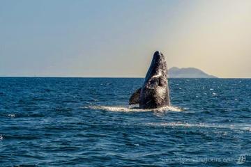 San Diego Half-Day Marine Wildlife...