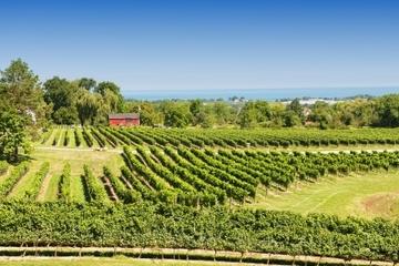 Tour privé : domaines viticoles de Niagara Falls
