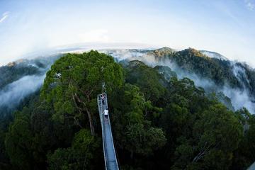 Sumbiling Temburong Canopy Walk ...