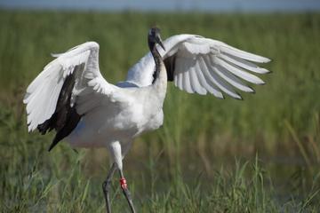Private Führung: Vogelbeobachtung im Dongtan Wetland Park von Shanghai