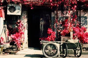 Small-Group Shanghai Hidden Sites Walking Tour