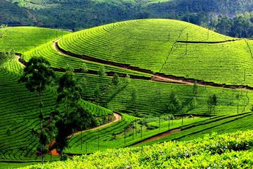 3 Days Kerala Tour Discover Tea Gardens and adventure through the hills of Munnar from Kochi