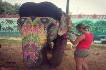 Day Excursion with Elephants in Jaipur