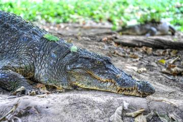 Private Eco-Tour: Crocodile Watching With Heritage Trail