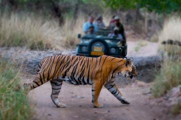 Private Tour: 5 Days Golden Triangle and Ranthambore Wildlife Safari from Delhi