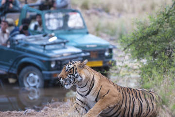 Private Tour des Nationalparks Ranthambore & 2 Übernachtungen ab ...