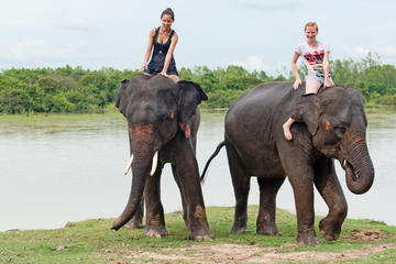 Private Tour: Jungle Adventure from Goa Including Elephant Ride and...